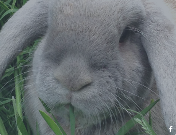 Meet Billy, Our Senior Four Legged Hay Expert