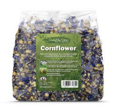 Blue Cornflower (The Hay Experts)