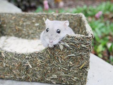 Rollin' Rodent Sand Bath
