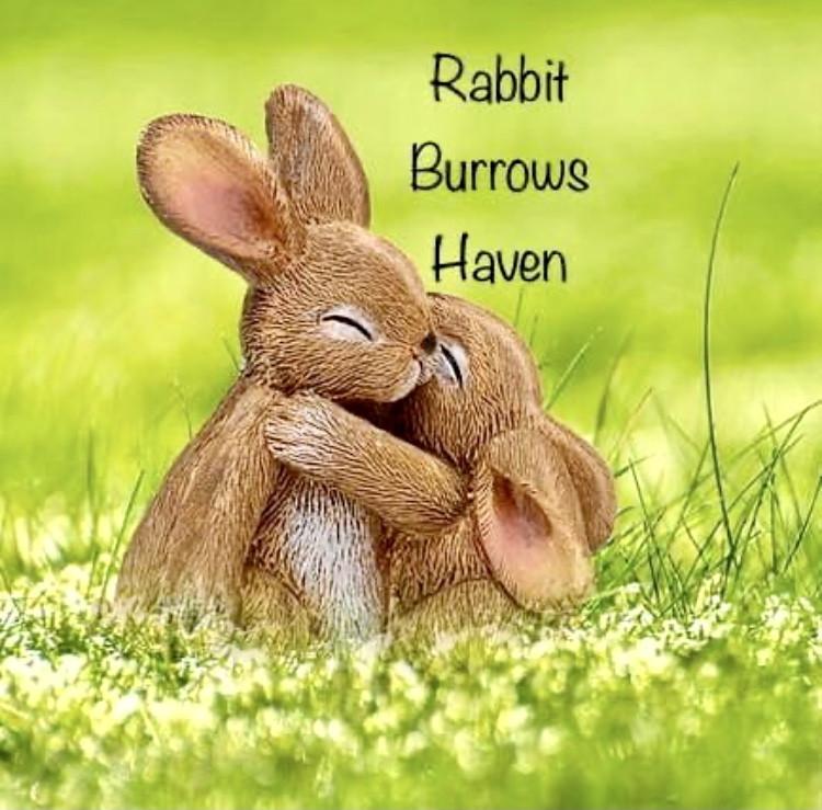 Rabbit Burrows Haven