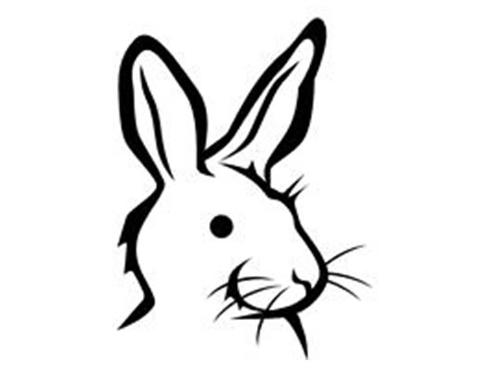 Scunthorpe Rabbit Rescue Wishlist